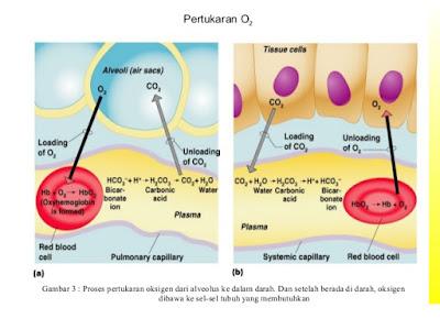 pertukaran oksigen dan karbondioksida