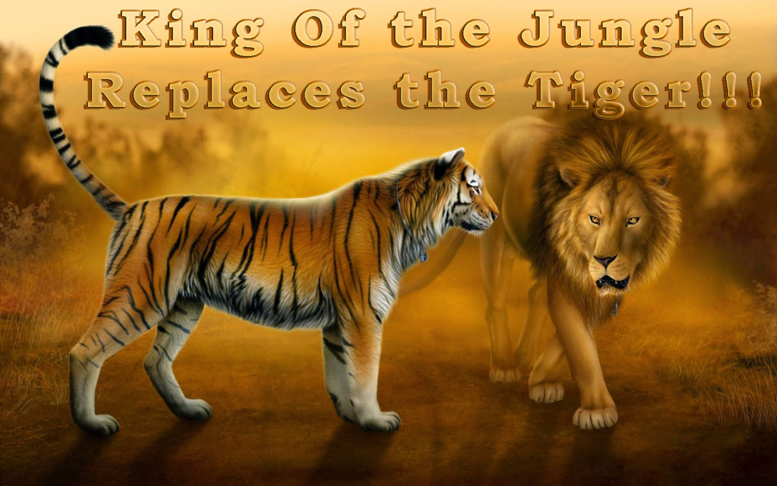 Why the lion is the king of the beasts Description of the lion, habitat and way of life 78