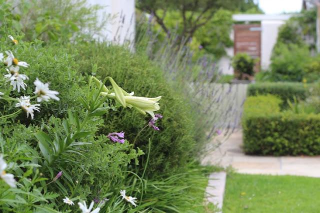 khu vườn tràn đầy sức sống