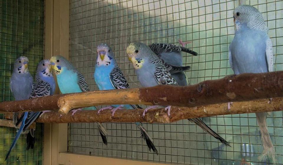 Parrots as Pets For Sale Parrots For Sale in Lahore