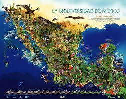 La biodiversidad:resultado de la evolucion
