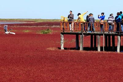 pantai aneh berwarna merah
