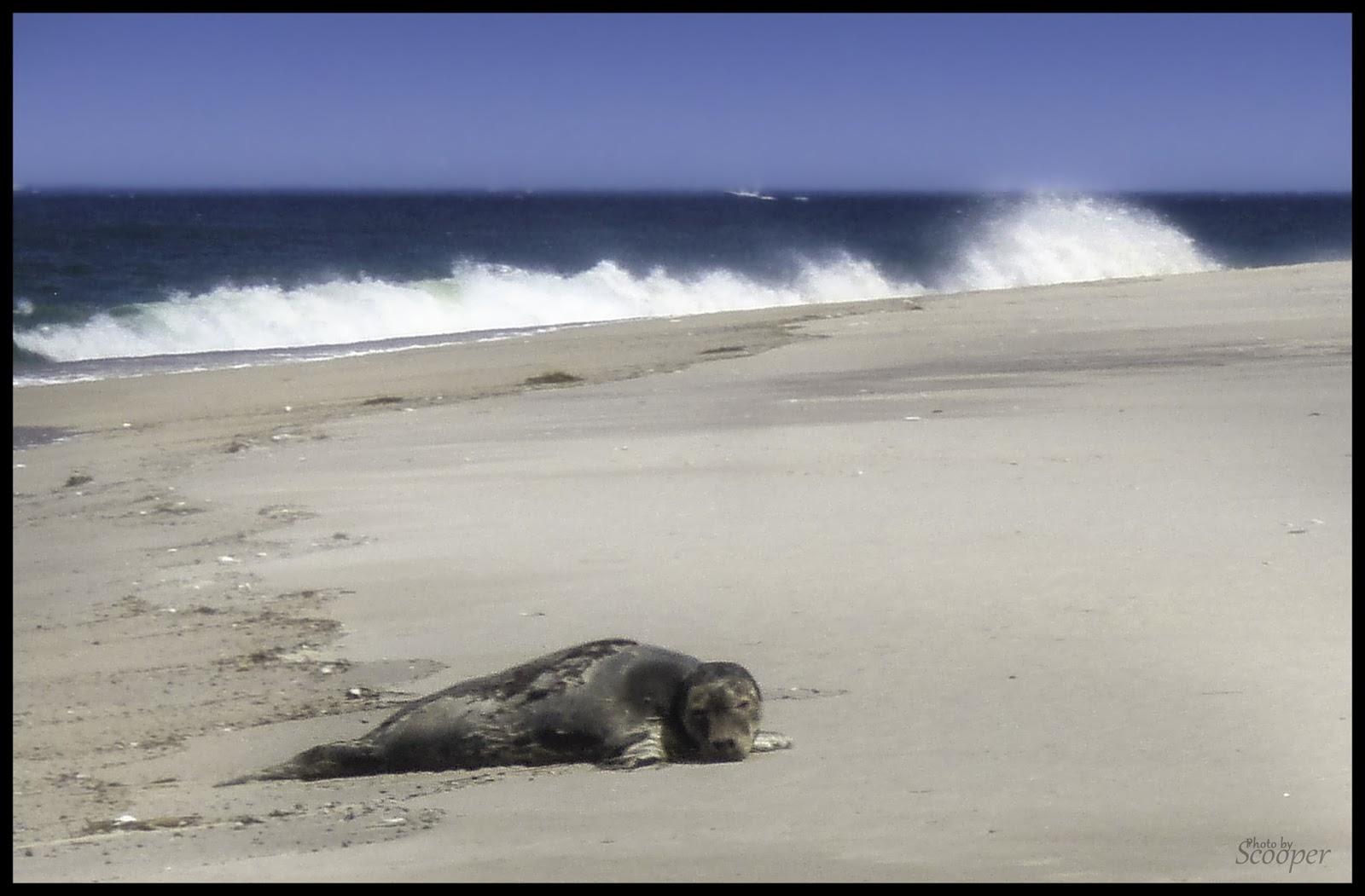 Long Sands Beach Tides