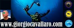 www.giorgiocavallaro.com