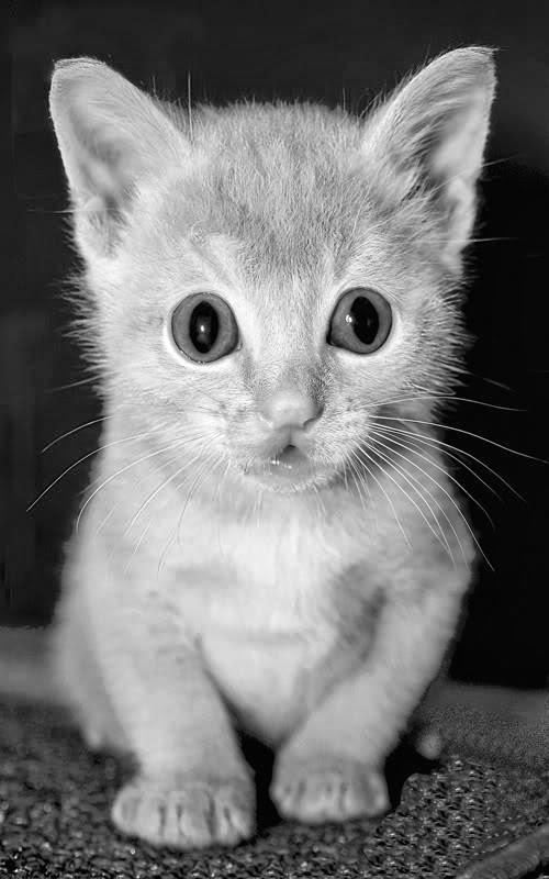 Kumpulan Gambar Kucing Imut-imut