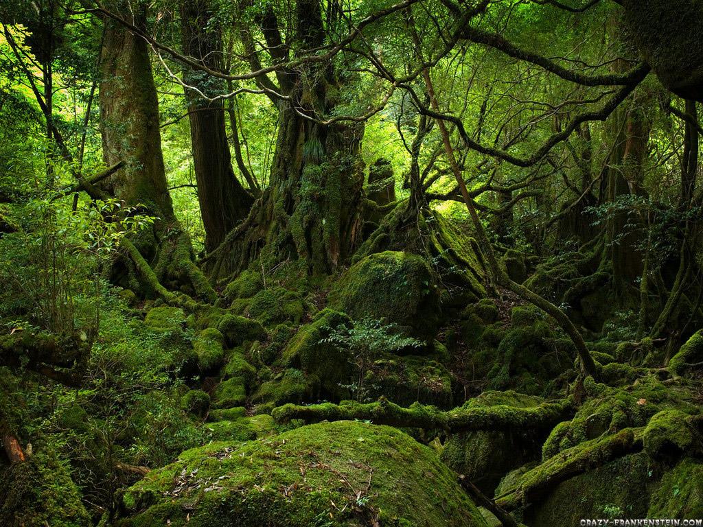 http://1.bp.blogspot.com/-vGnG57g2Xkw/Txw891TWSfI/AAAAAAAAD08/V_HNJqrW8XU/s1600/green-forest-wallpaper.jpg