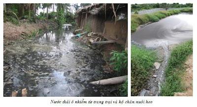 Nước thảy ô nhiễm từ trang trại và hộ chăn nuôi heo
