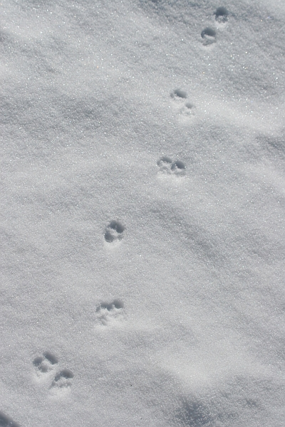 eagle tracks - photo #43