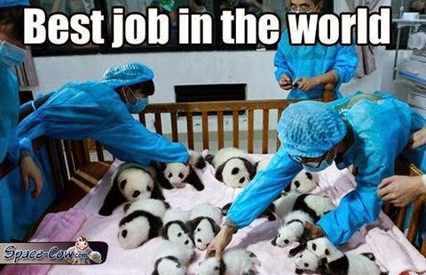 funny cute baby pandas