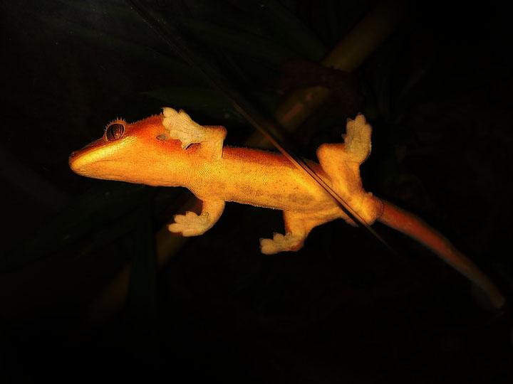 Un paseo por la zoología: marzo 2012