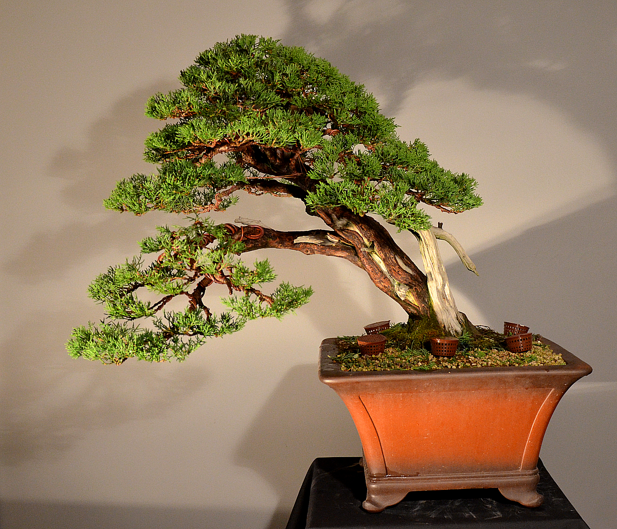 Bonsai Living Art Progetto Futuro
