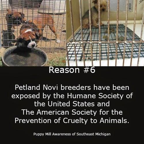 puppy mill awareness southeast michigan top ten reasons