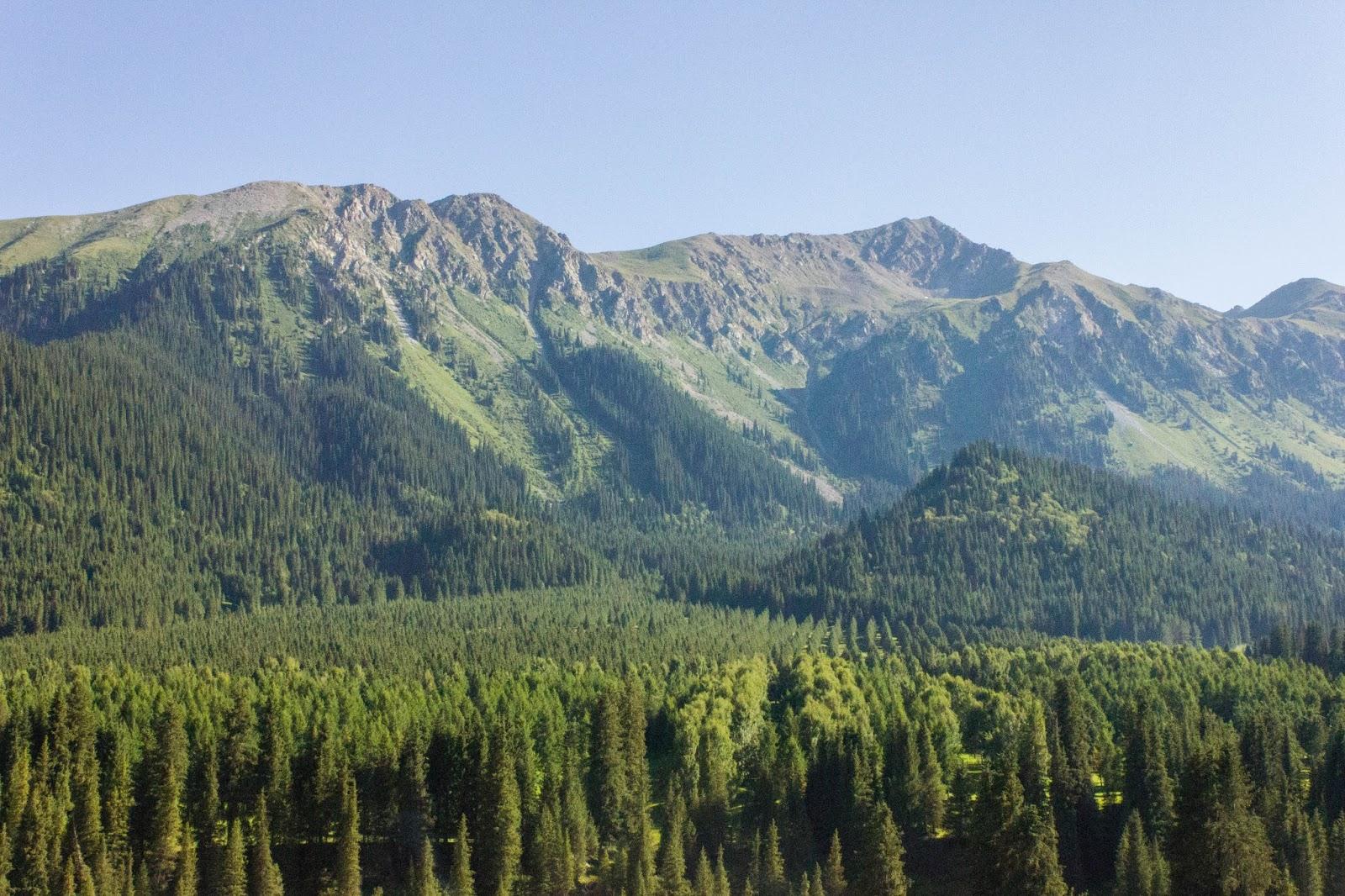 Кыргызстан, Джеты-Огуз, Иссык-Куль, голубые ели