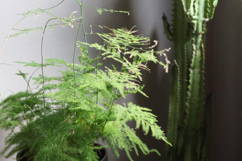 unelma ja kaktus