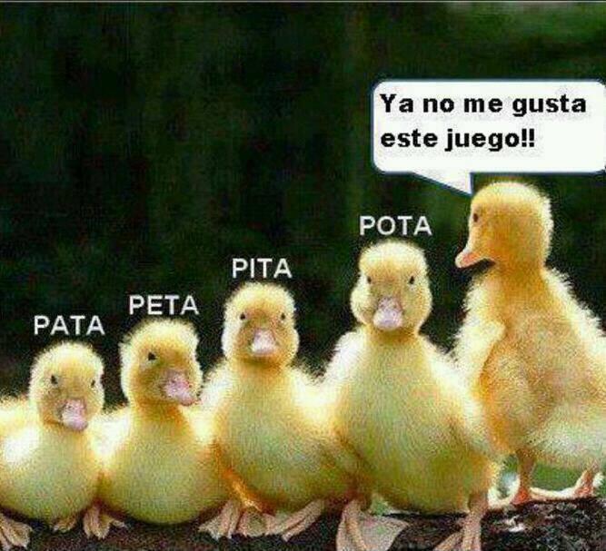 PATITOS