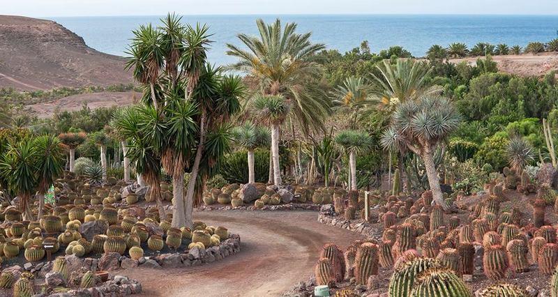 jardines que eligieron en su da los sabios del rey carlos iii para aclimatar en ellos las plantas llegadas del nuevo mundo antes de su traslado a los