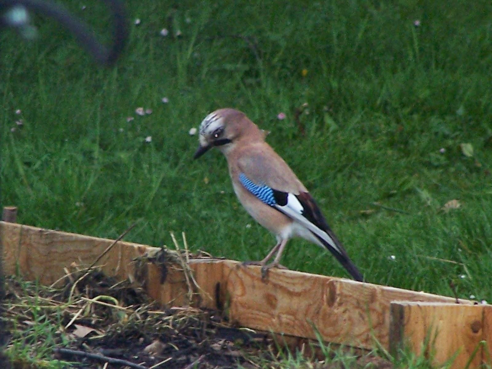 Ecolo bio nature permaculture urbaine et jardinage bio - Comment attirer les oiseaux dans son jardin ...
