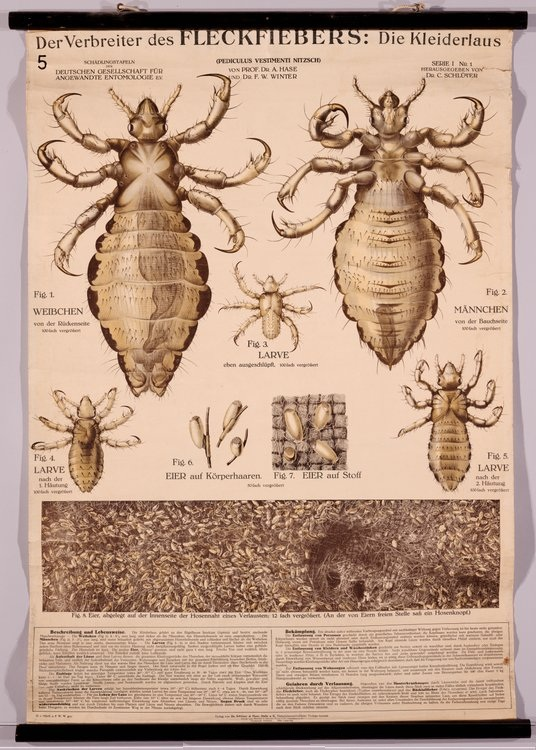Bibliodyssey Insect Wall Charts