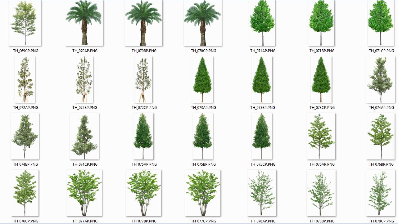 Arboles png gratis images - Arboles y arbustos ...