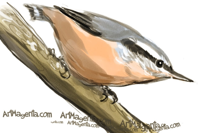 Red-breasted Nuthatch sketch painting. Bird art drawing by illustrator Artmagenta