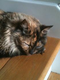 Hallie kitty