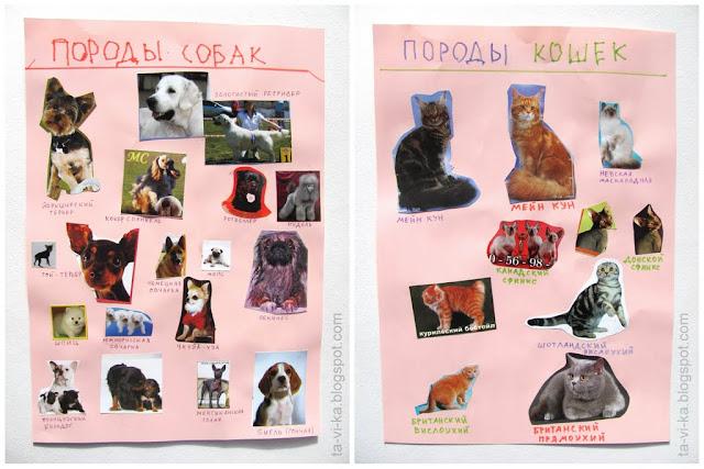 плакат Породы кошек и собак