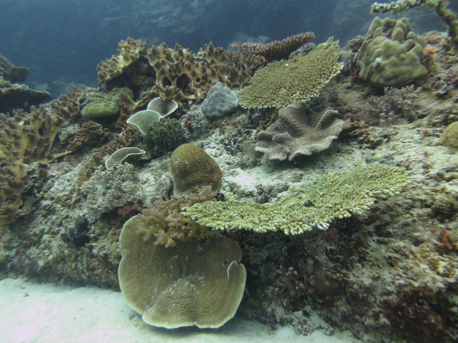 Pulau Mantanani, Kota Belud