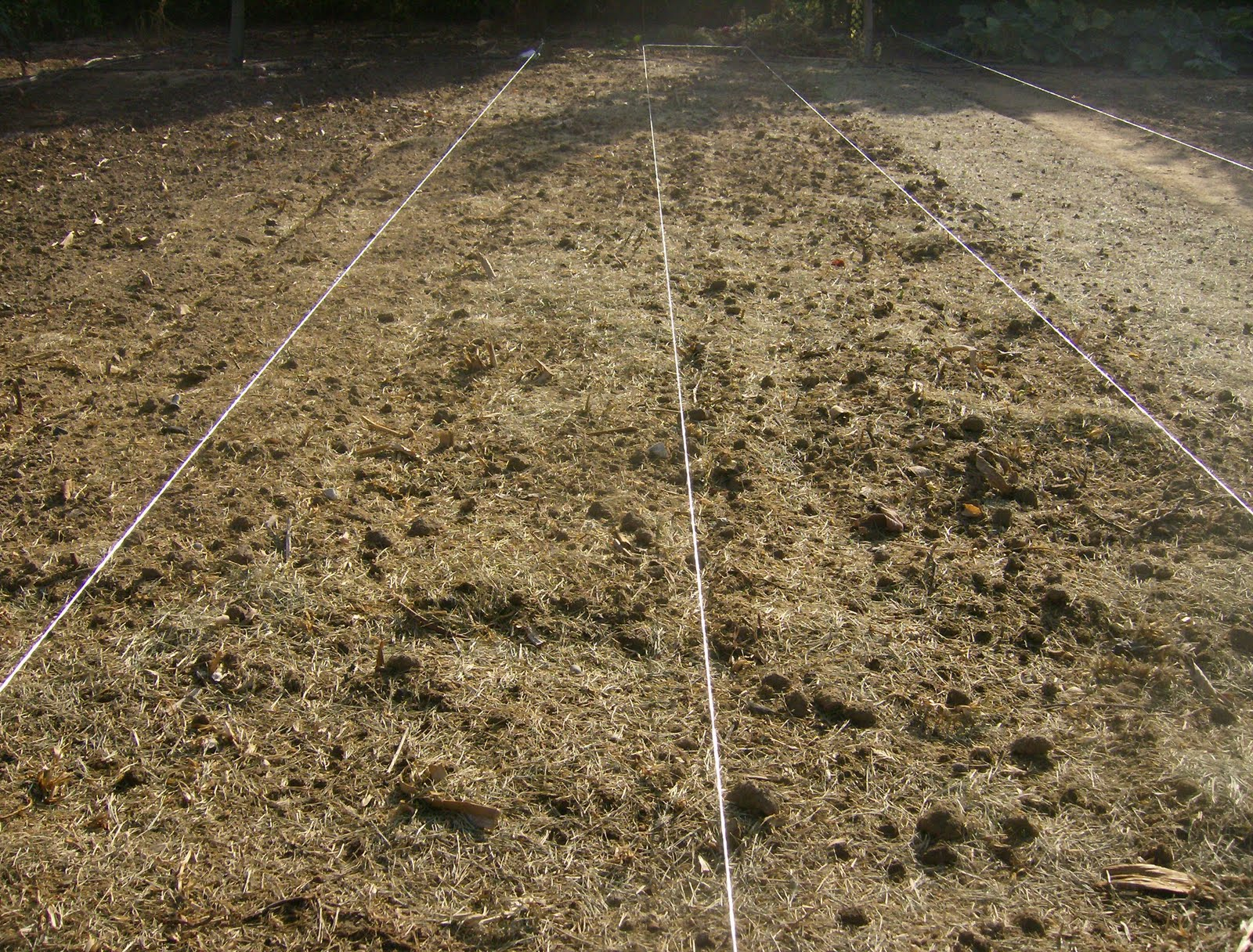 El huerto del lopez siembra de patatas de oto o for Como plantar patatas en casa
