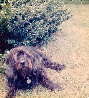 Twinkle: the Devilish Dog of My Childhood