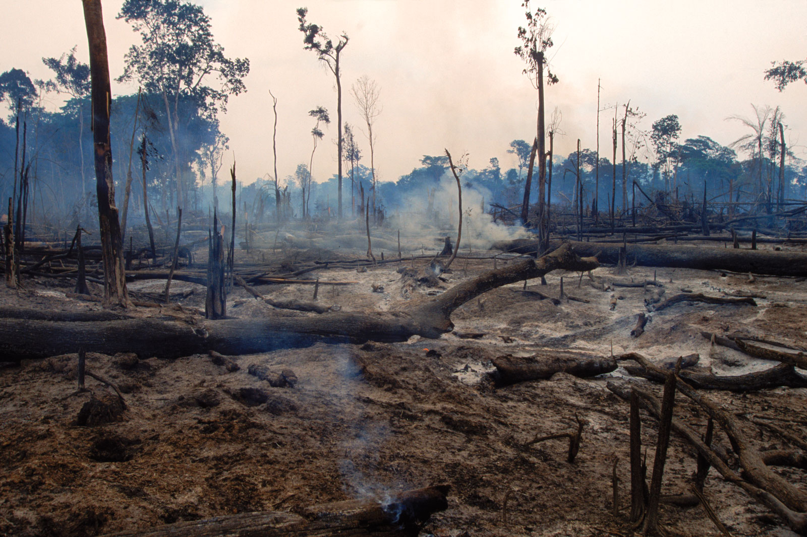 deforestation in the amazon rainforest and Nearly two-thirds of the amazon rainforest is located in brazil, making it the biggest component in the region's deforestation rate helpfully, brazil also has the.