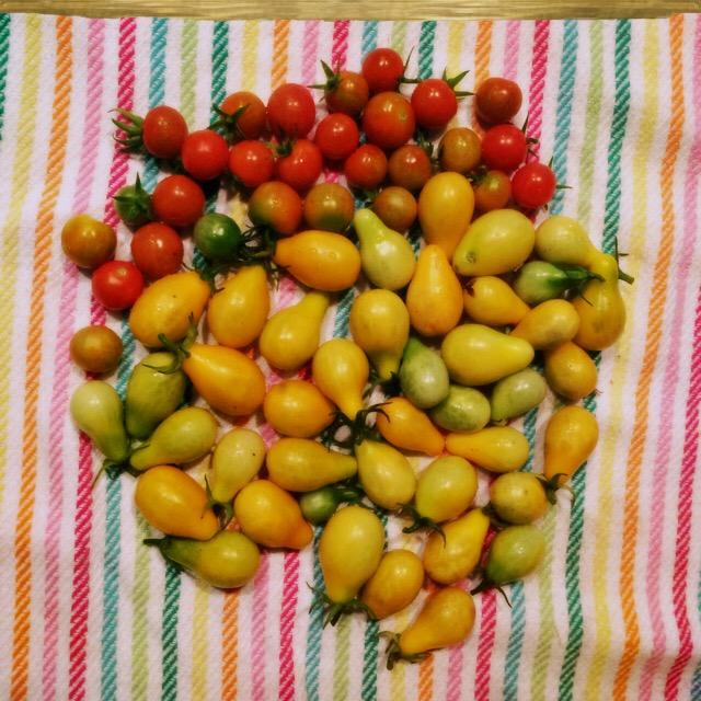 Tomato circle