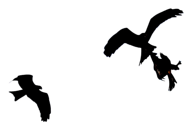 birds silhouetted against a white background
