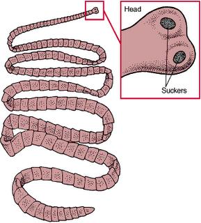 Pengobatan dan Pencegahan Penyakit Cacing Pita