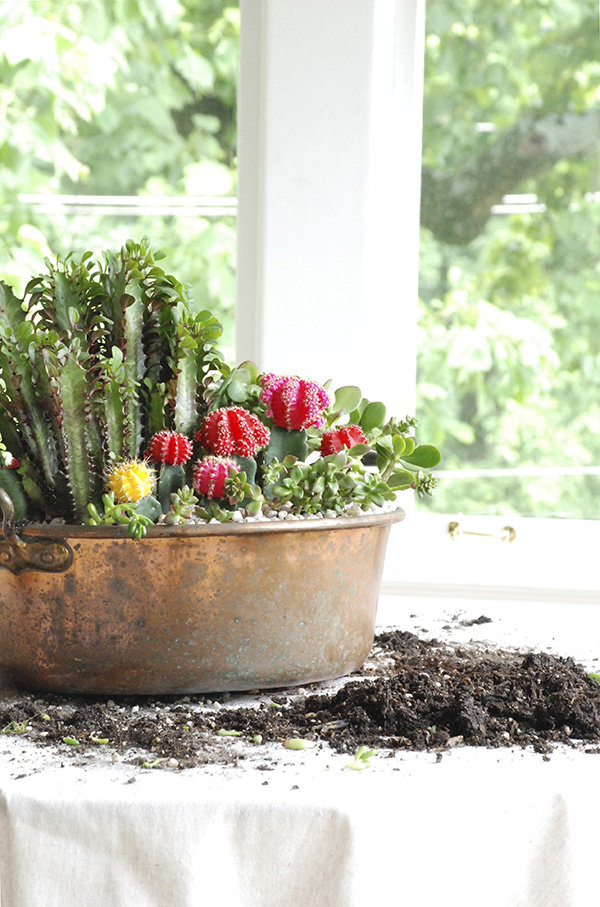 succulent container garden home depot dual diy the