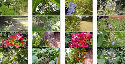 Macro Nature Theme for Windows