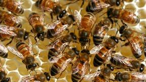 CJBA #1 Hive