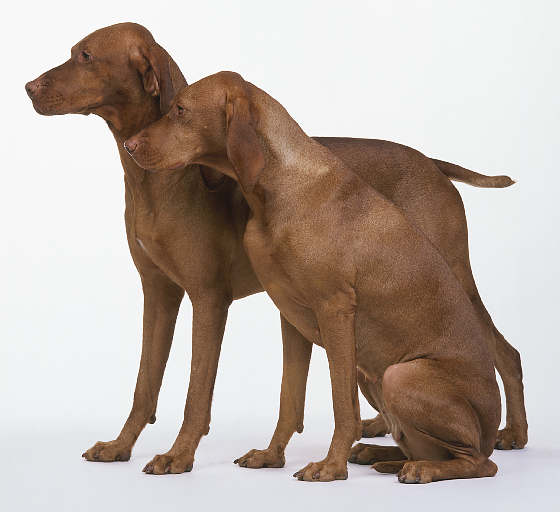 FASHION VALLEY: LATEST BROWN DOGS