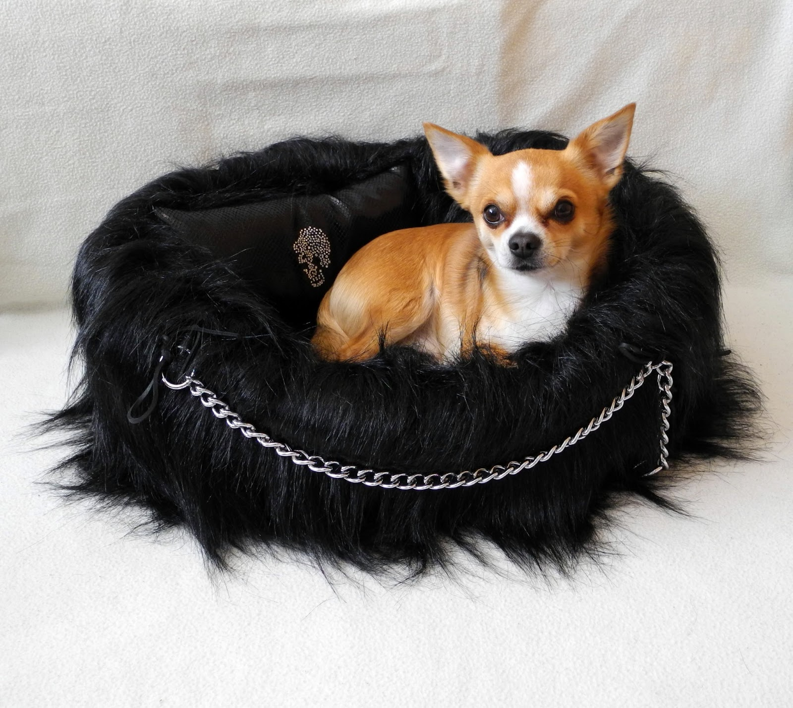 Chihuahua Betten: Rockys Blog: Lola Santoro