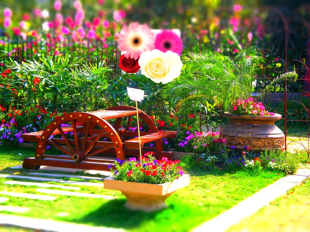 Flowers HD Wallpapers 2013