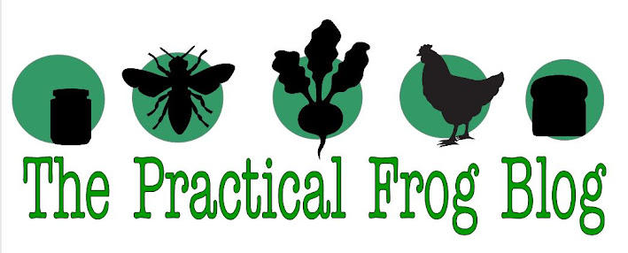 The Practical Frog Blog