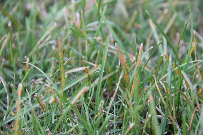 Lawn And Landscape Tips From The Turf Doctor November 2012