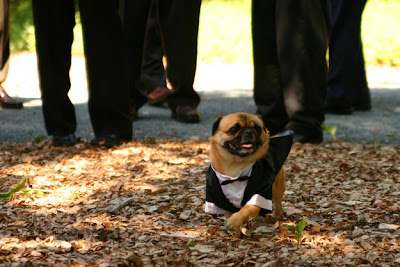 perrito con traje y corbata