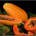Apa ada pada buah betik?