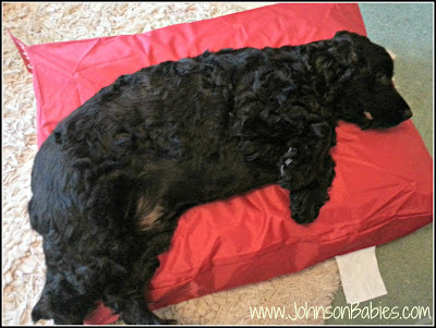 Loving the Fatboy Doggie Bed