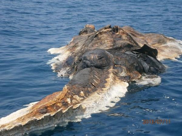 Strange Creature Found in Persian Gulf