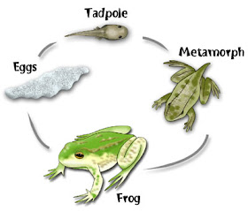 Our Frog Page