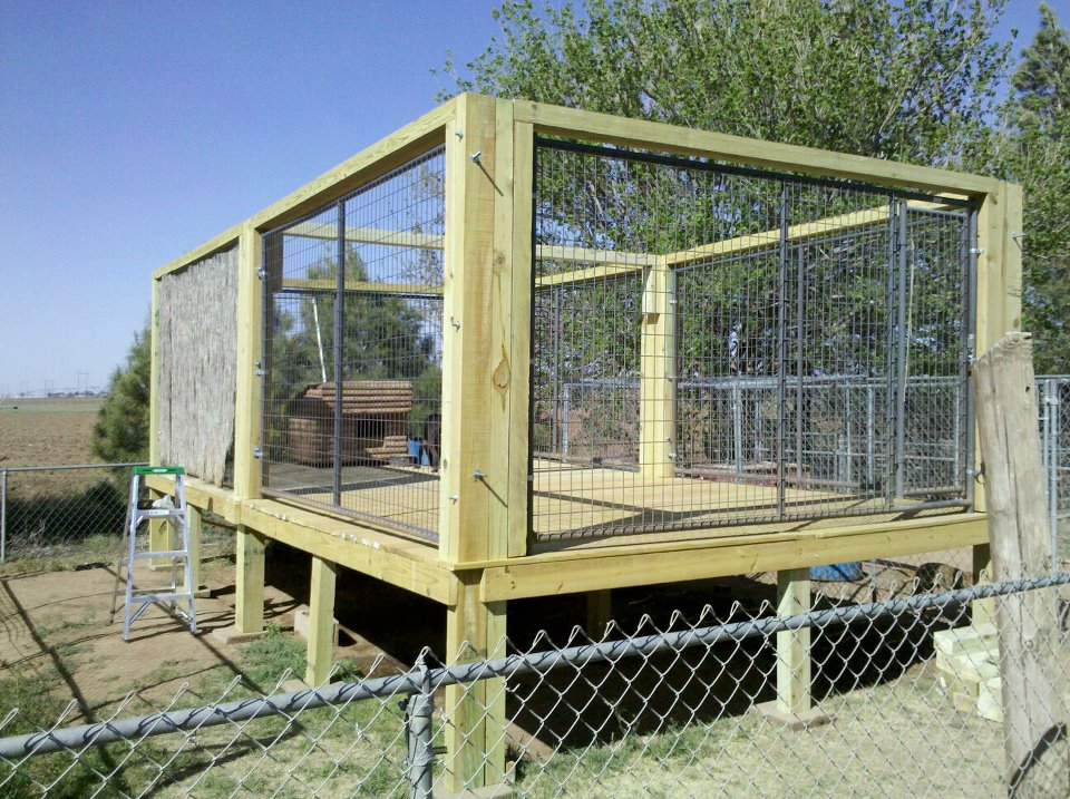 The real apbt dog kennel setups and designs for Breeding kennel designs
