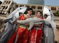 Corações felizes amam tubarões