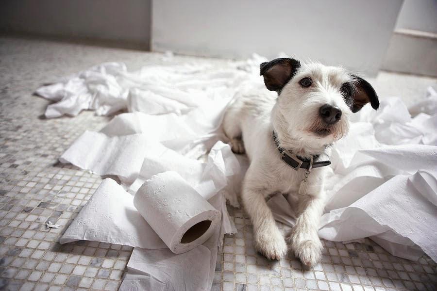 perro sobre papel higienico