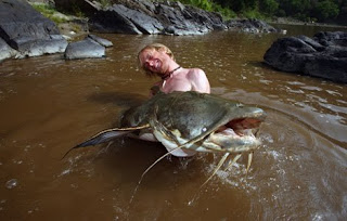 largest goonch catfish